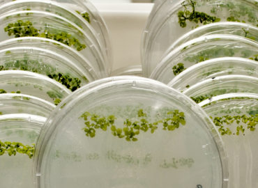 Total Plant RNA Extraction