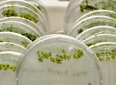 Extracción de RNA Total de Plantas