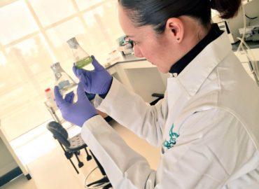 Extracción de DNA Nuclear de Plantas